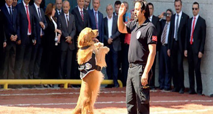 Köpek Eğitim Polisi Nasıl Olunur?